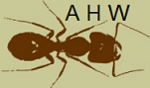 Welsh Ant Avatar